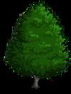 Red Alder1-icon
