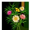 Daisy Bush-icon