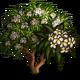 White Plumeria-icon