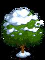Wild Cashew7-icon
