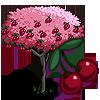 CherryTree-icon