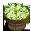 Night Cereus Bushel-icon