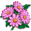 Super Pink Aster-icon
