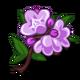Wild Thyme-icon