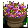 Queen Sheba Orchid Bushel-icon