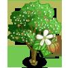 Teak Tree-icon