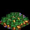 Squash-bloom