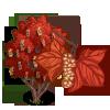 Striped Maple Tree-icon