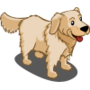 Golden Retriever Adult (Cream)-icon