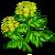Lovage-icon
