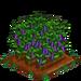 Purple Podded Pea 100