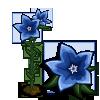 Chinese Bellflower Single Bloom-icon