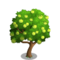 Pomelo Tree-icon