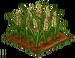 Australian Barley 100
