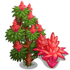 Bromeliad Tree-icon