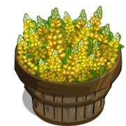 Yellow Lupin Bushel-icon
