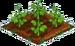 Begonia 33