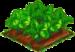 Fairy Rhubarb 66