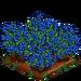 Organic Blueberries extra100
