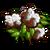 Australian Cotton-icon
