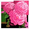 Damask Rose Full Bloom-icon