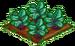 Violet Vein Spinach 100