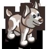 White Husky Pup-icon