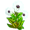 Winter Dandelion-icon