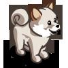 Cream Shiba Inu Puppy-icon