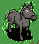 Graues Pferd-icon