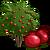 PomegraniteTree