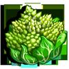 Spiky Cauliflower-icon