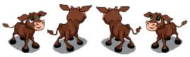 Brown Calf Rotate