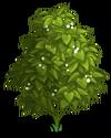 Deadly Nightshade Tree1-icon
