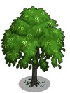 Indian Laurel Tree1-icon