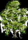 Durian Tree4-icon