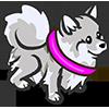 Silver Pomeranian-icon