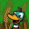Bumper Wheat