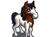 Abaco Barb Horse Foal