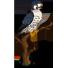 Peregrine Falcon-icon