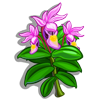 Fairy slipper-icon