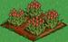 Red Tulip 66