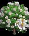 Southern Magnolia Tree-icon