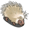 White Porcupine-icon