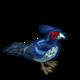 Kalij Pheasant-icon