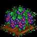 Super Grape extra100