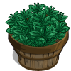 Black Tea Bushel-icon