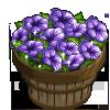 Black Velvet Petunia Bushel-icon