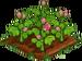 Begonia 66