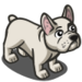 French Bulldog-icon